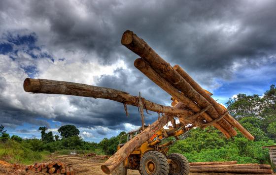 logging-2