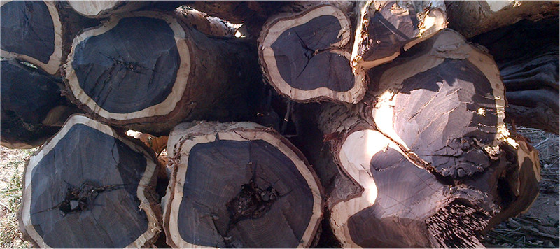 Экзотические породы древесины